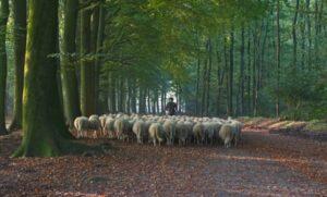 Benefietdiner Slow Food Den Haag Zeldzamerassen.nl